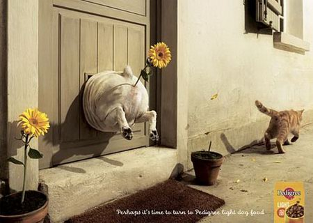 Interesting Dog Food Ads Design