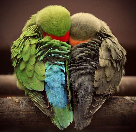 Amazing Photograph captures Vivid Animals