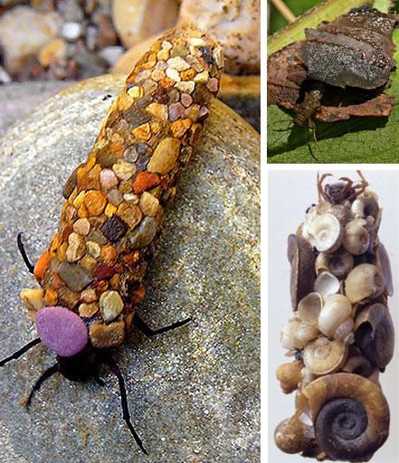 amazing animal architect