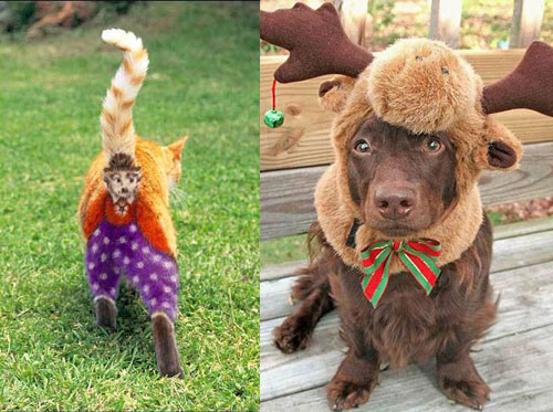 Ready to Dress Up Your Pets?