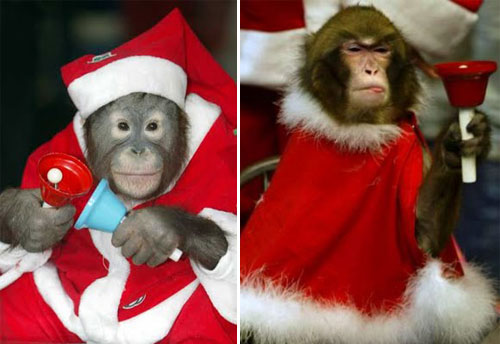 Christmas Celebration for Animal