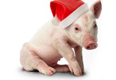 Christmas Celebration for Animal