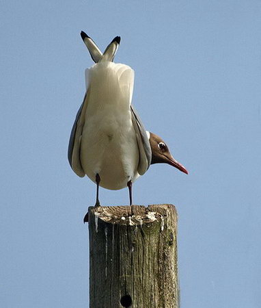 10 Funny Looking Bird Photos