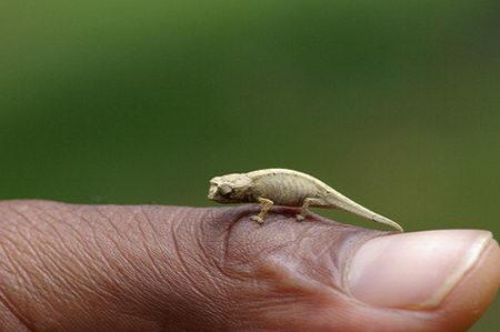 mini tiny animal kingdom