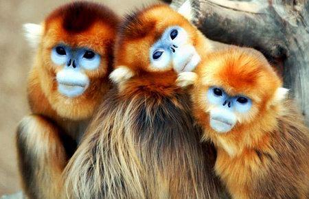 Wildlife Exhibition - Animal of Week