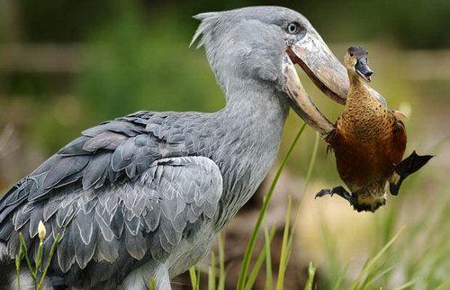 Amazing Moment of Vivid Animals