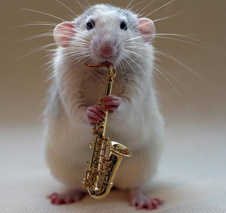 talented musical mice