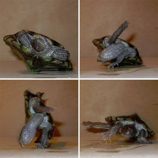 Ninja Turtles in Real Life