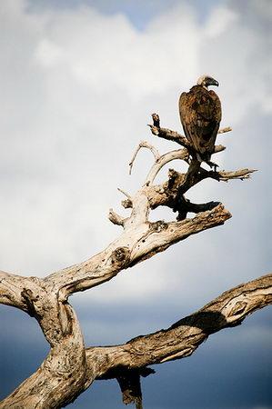 beautiful wild animal photos