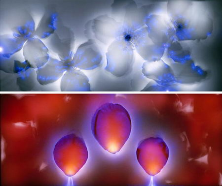 Amazing Kirlian Photography