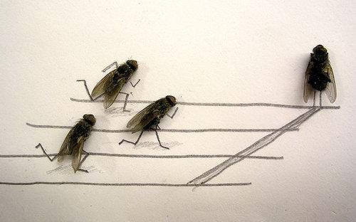 Weird and Unusual Art about Dead Flies
