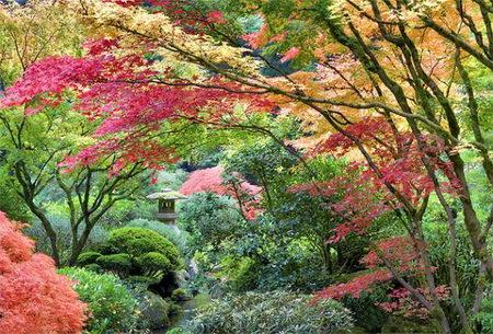 amazing garden photographer 2009
