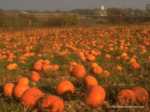 Delicious Autumn! Colorful Autumn!