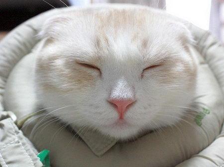 super cute cat photos
