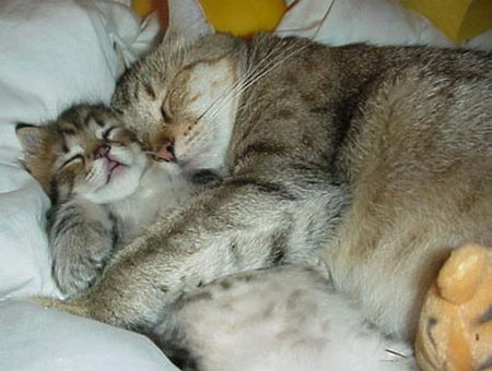 funny photos of cat's sleeping position