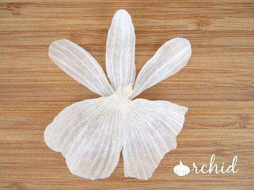 Exposing Garlic - Blooming Scenes You've Never Seen