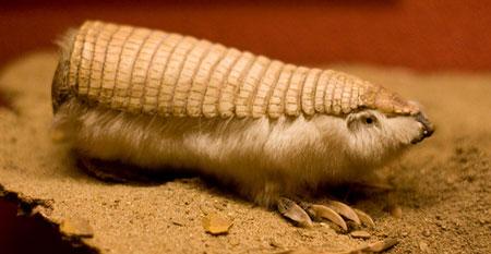 Odd Animal Plant - 17 Weirdest Species