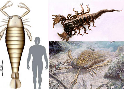 sea scorpion (Eurypterid)