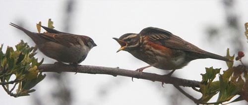 Animal Planet 6 - Beautiful Birds