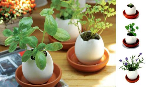 Egg Hatches Plant!
