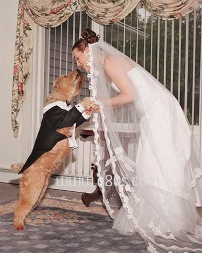 10 Most Weirdest marriages