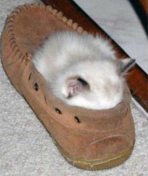 22 Funny Sleeping Cat Pictures