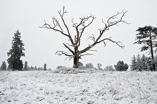 Amazing Photography about A Dead Tree