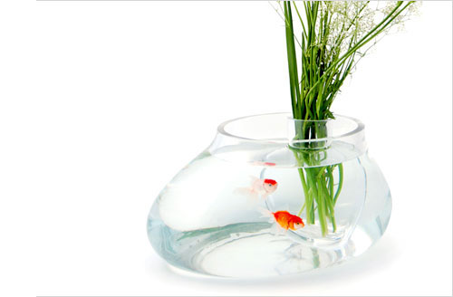 Decorative Fish Bowls Inspiration 60 Fish Bowl And Aquarium Design For Fish Lover Design Swan