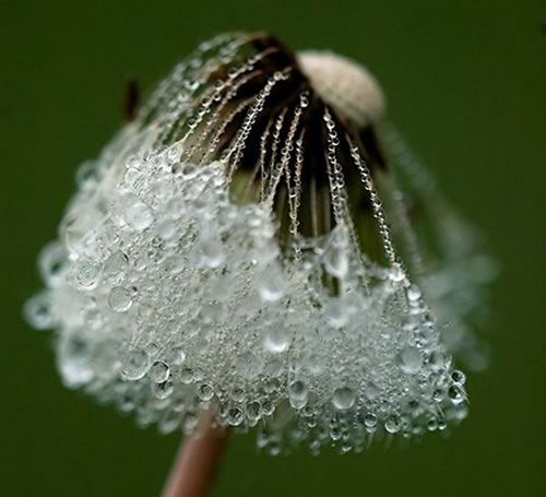 Breathtaking Photograph of Dew Drops (30 Pic)