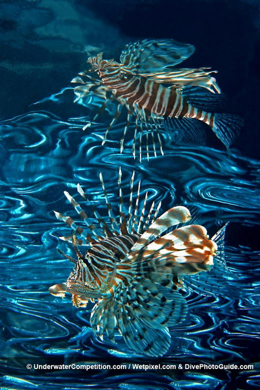Amazing 2010 Underwater Winning Photos