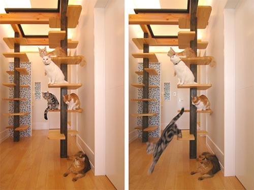 Lovely Cat House: A Playground for Cat