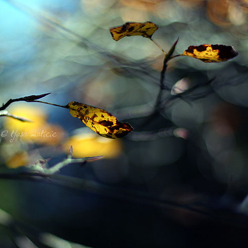 Poetic Photography of Tjasa Maticic's Zen World