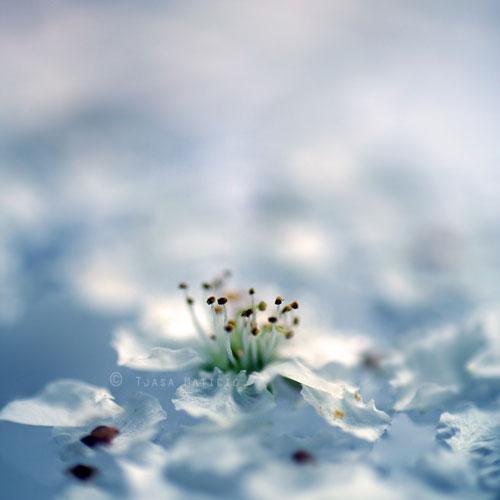 Poetic Photography of Tjasa Maticic's Zen World