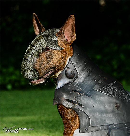 Armored Animals: Creative Photo manipulation Contest from Worth1000