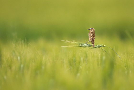 Amazing Wildlife Photographs from 2011