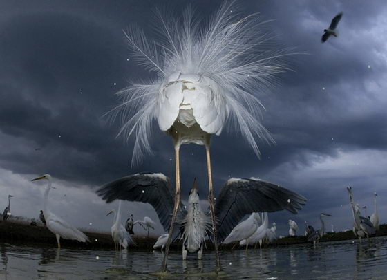 Amazing Wildlife Photographs from 2011