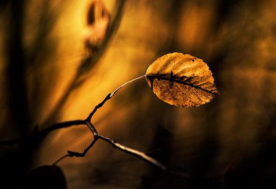 Beautiful Nature Photograhy by Joni Niemelä