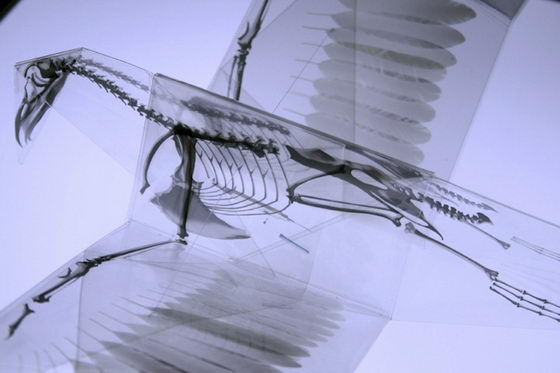 Incredible X-Ray Animal Origami