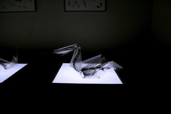 Incredible X-Ray Animal Origami