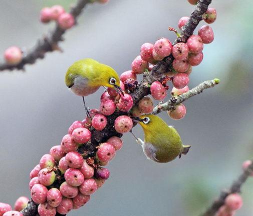 18 Amazingly Beautiful Birds Photography