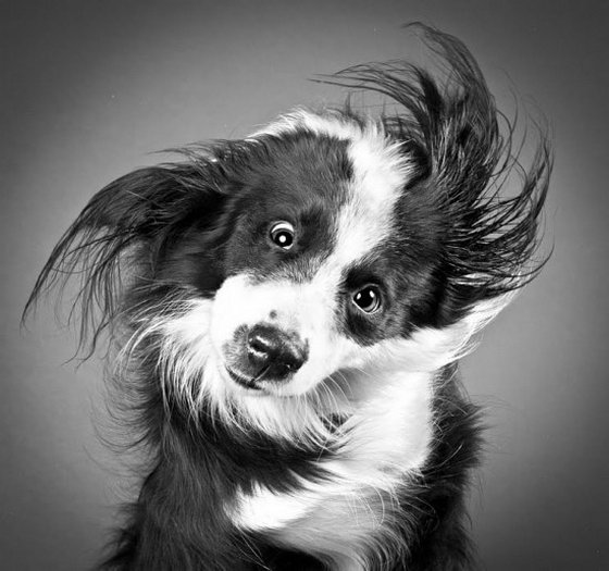 Dogs in Motion: High Speed Dog Photography Carli Davidson