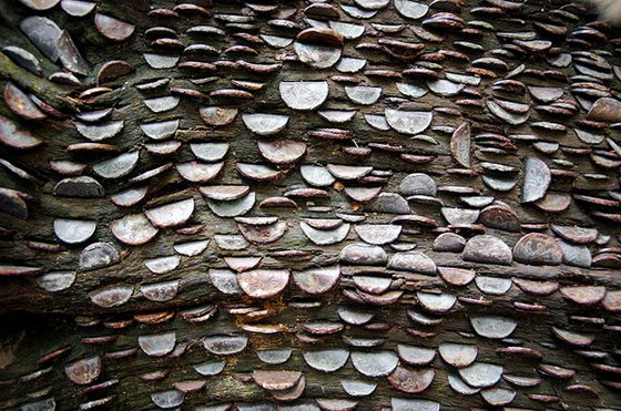 Unbelievable Money Trees: Hundreds of Coins Stuck into Tree Trunk