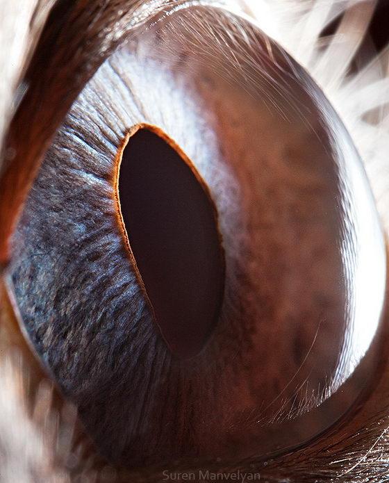 10 Amazing Macro Photos of Animal Eyes by Suren Manvelyan