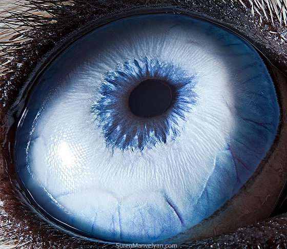 10 Amazing Macro Photos of Animal Eyes by Suren Manvelyan