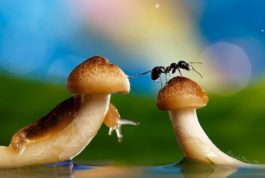 Insects in Wonderland: Amazing Macro Photography by Nadav Bagim