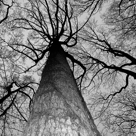 Stunning Trees Photographed by Grant Simon Rogers
