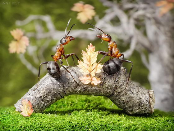 Ant Tales: Fantastic Macro Photography of Ant by Andrey Pavlov