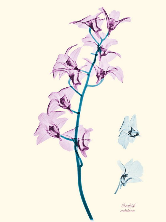 Stunning Floral X-Rays Photography by Brendan Fitzpatrick