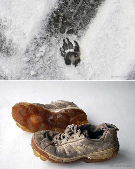 Animal Tracks: Interesting Animal Footprint Shoes by Maskull Lasserre