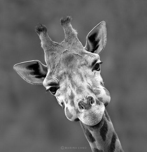 Beauty of Nature: Wildlife Photography Photo by Marina Cano